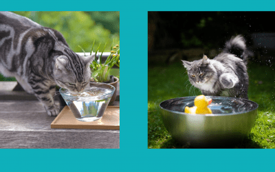 Do Cats Like Water?