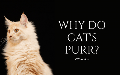 Why Do Cat's Purr?