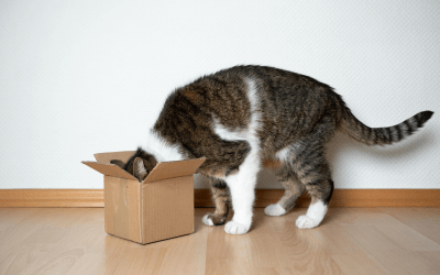 Why Do Cat's Like Boxes?