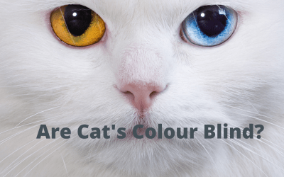 Are cats colour blind?