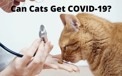 Can Cats Get COVID-19?