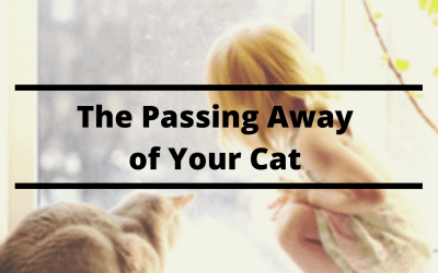 The Passing Away of Your Cat