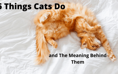 6 Things Cats Do, and The Meaning Behind Them