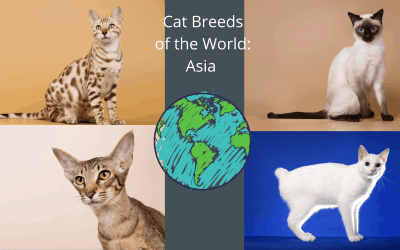 Cat Breeds of the World: Asia