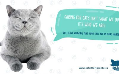 What Cat Sitting Service Is Best For Your Cat?