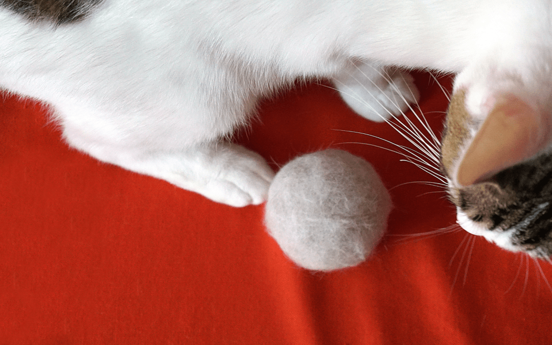 Everything You Need to Know About Hairballs