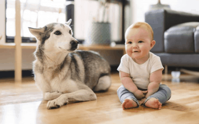 How to Introduce a Baby to a Cat or Dog