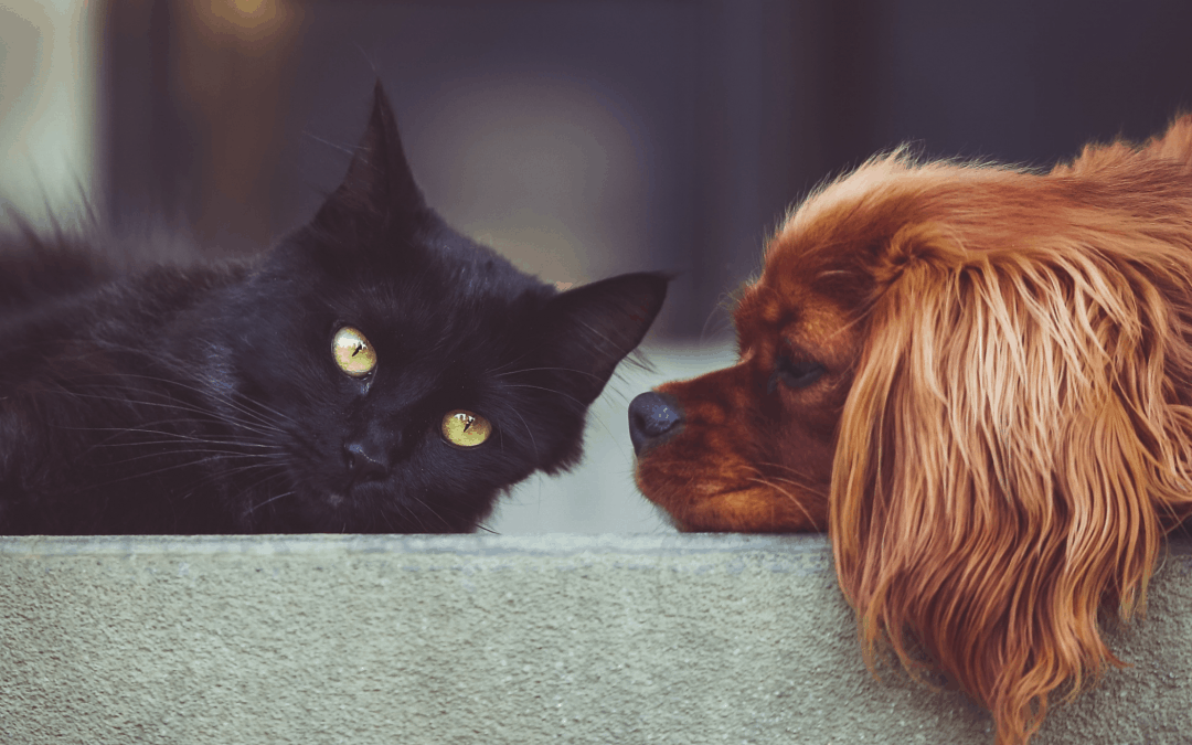 Tips to Keep your Pet Safe From Theft