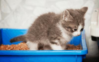 Kitten Litter Training