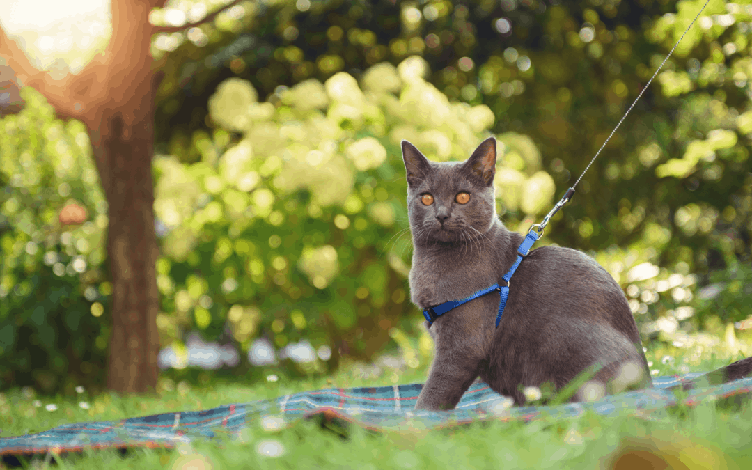 Summer Safety Tips for Pet Owners