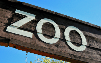 Toronto Zoo Connectionz: A Review