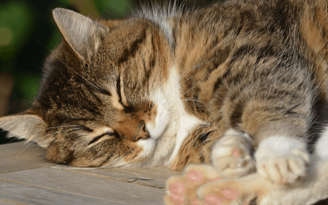 10 Reasons to Adopt a Cat