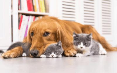 Multiple pet homes