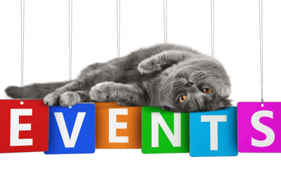Ultimate Guide to Pet-Friendly Events in the GTA