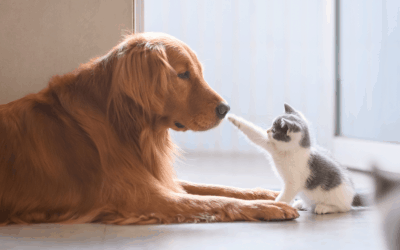 Rehoming a pet
