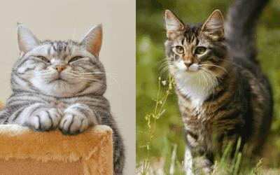 outdoor vs. indoor cats