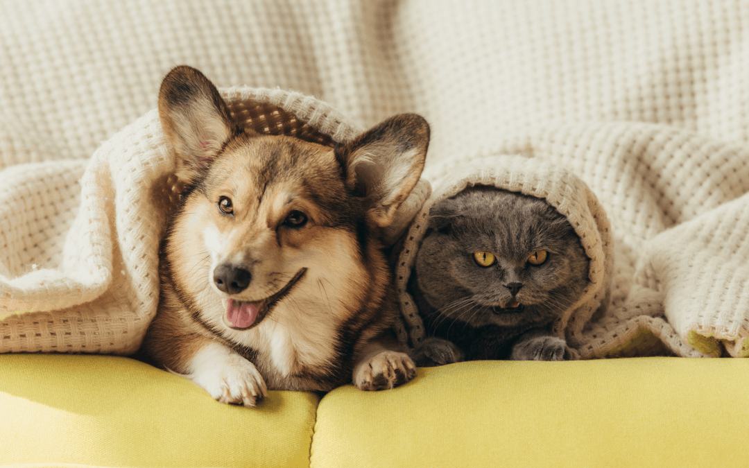 Pet Sitting vs Boarding Which is Better for Your Pet?