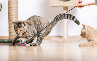 Importance of Playing with your Cat