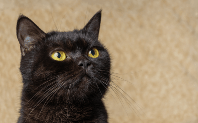 Black Cats: The Myths